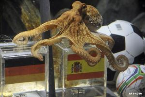"""PAUL THE OCTOPUS"""