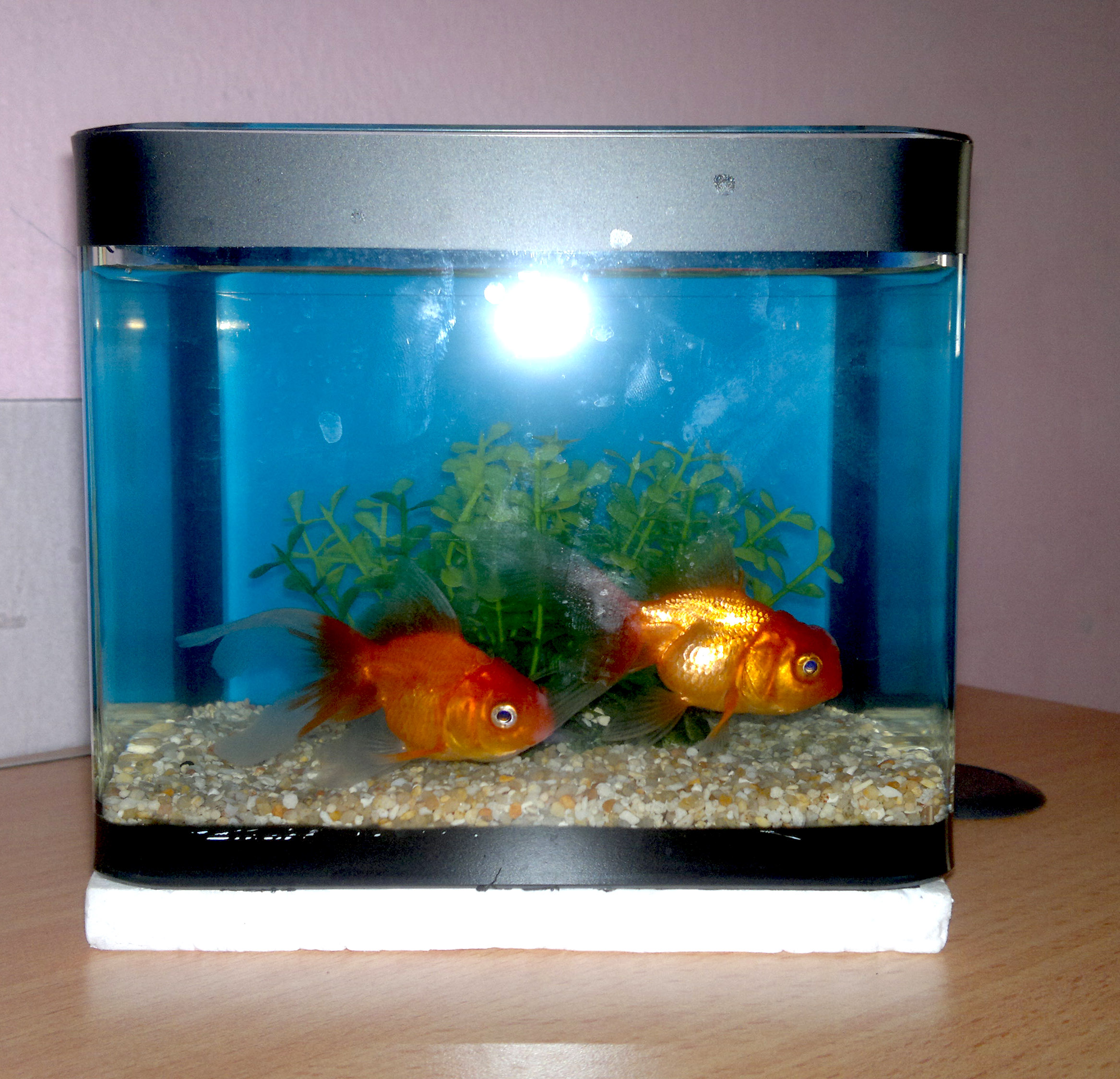 Goldfish tank design ideas for Aquarium fish for pond